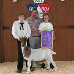 Grand Champion Goat - Caitlin Schroell; Buyer - Lindsey Construction
