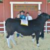 Reserve Champion Steer - Anthony Ollis CWFFA; Buyer - Terry Gibson